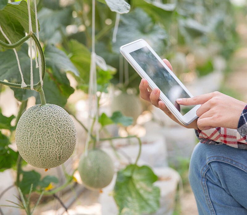 Best 6 Hydroponic Fruits