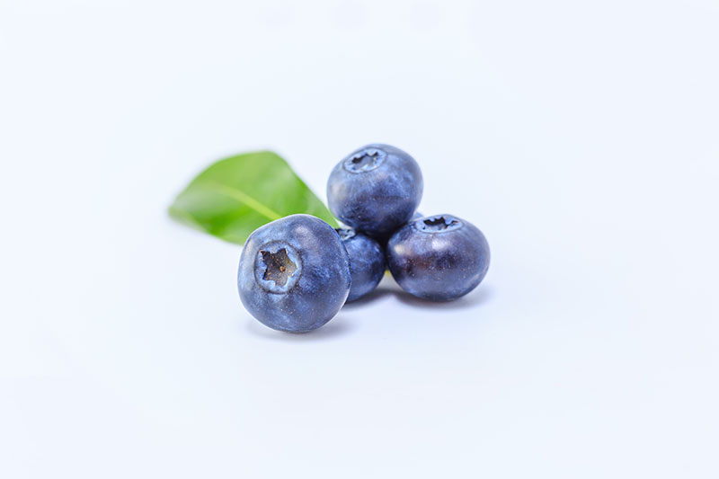 Best 10 Hydroponic Herbs Blueberries