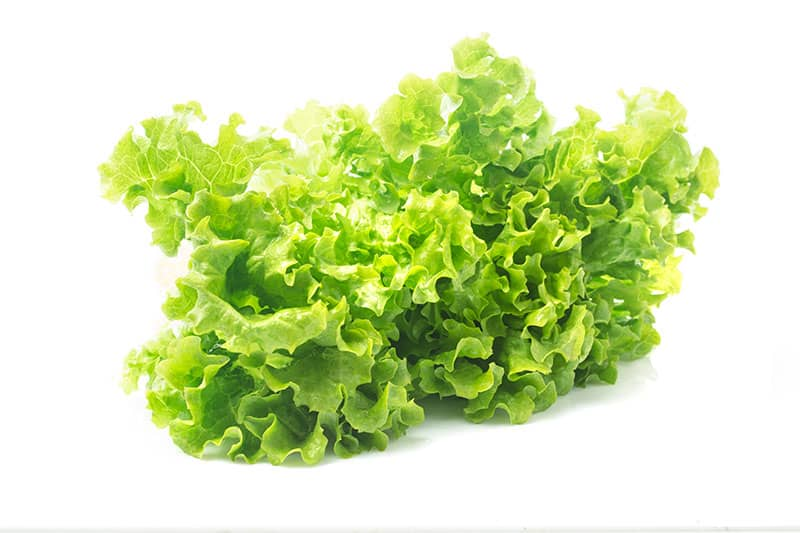Lettuce Best 10 Hydroponic Vegetables