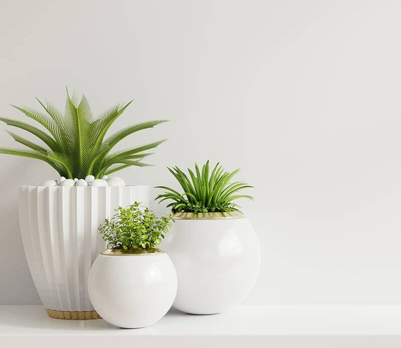 Top 10 Hydroponic House Plants