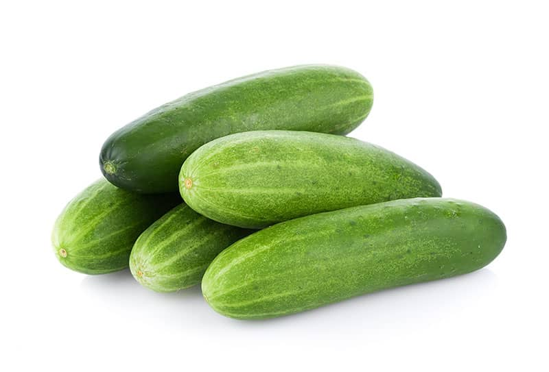 cucumber Hydroponic Vegetables