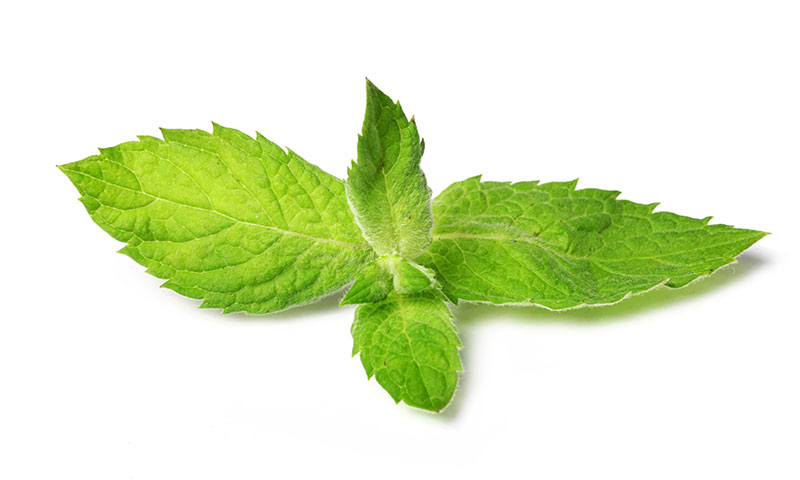 Peppermint Best Hydroponic Herbs