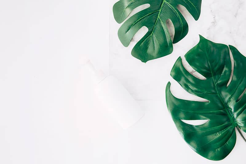 monstera leaves hydroponic