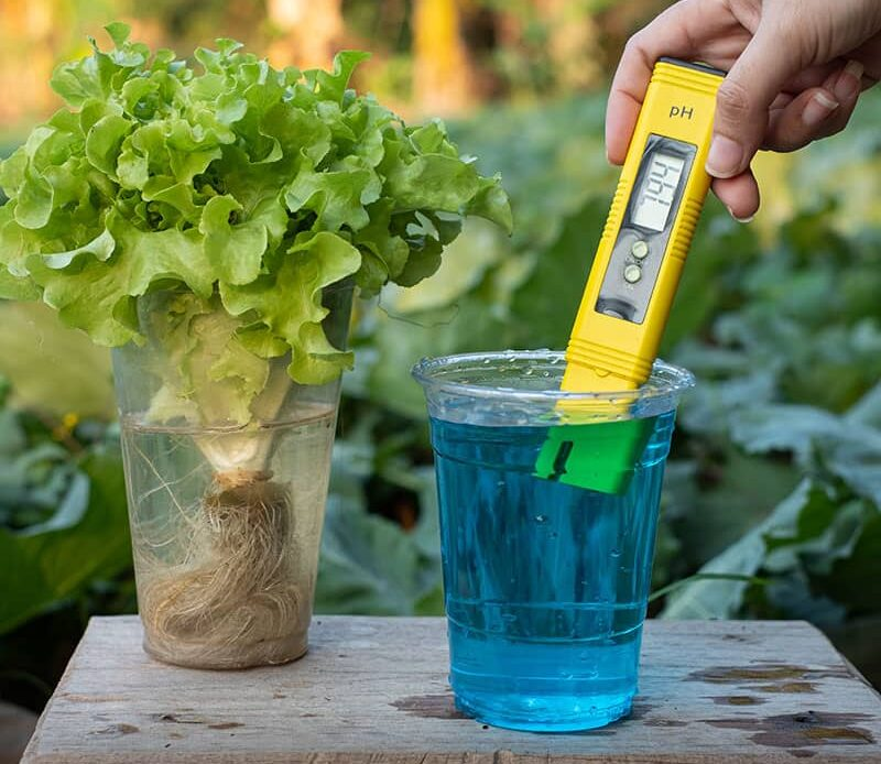 Best pH For Hydroponics