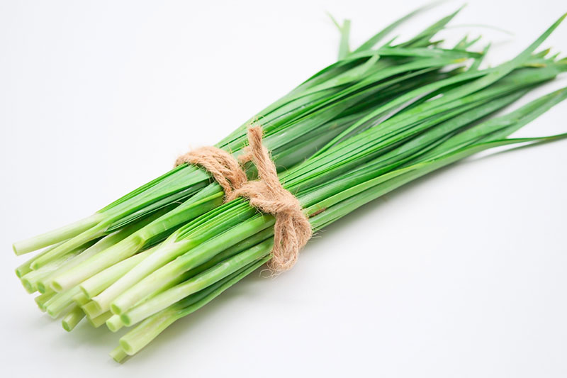 Chives One of Most Profitable Plants to Grow Hydroponically